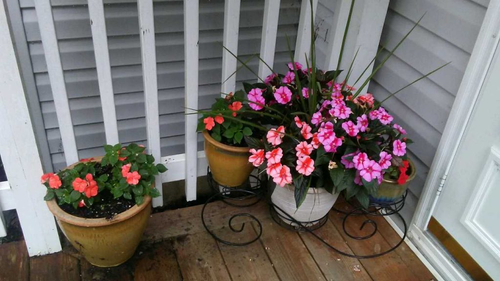 Potted flowers on Angeline's front porch.
